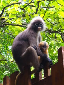 Thailande, singe, blog, voyage