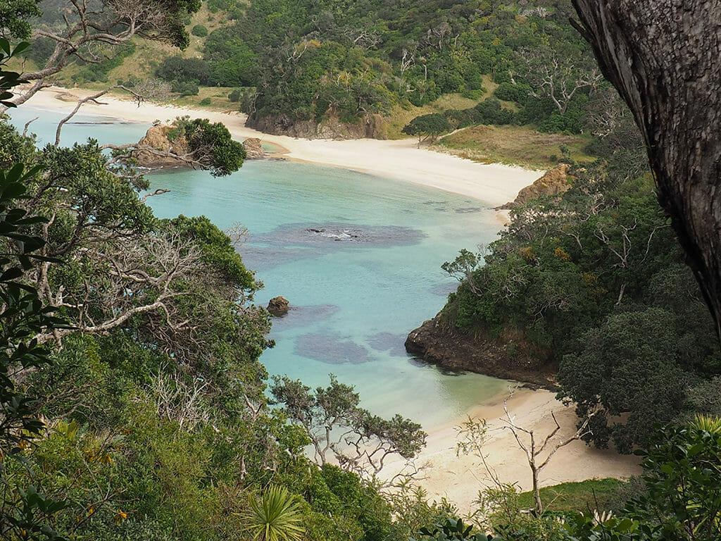 Randonnée près de Whangarei avec les Mermaid Pools