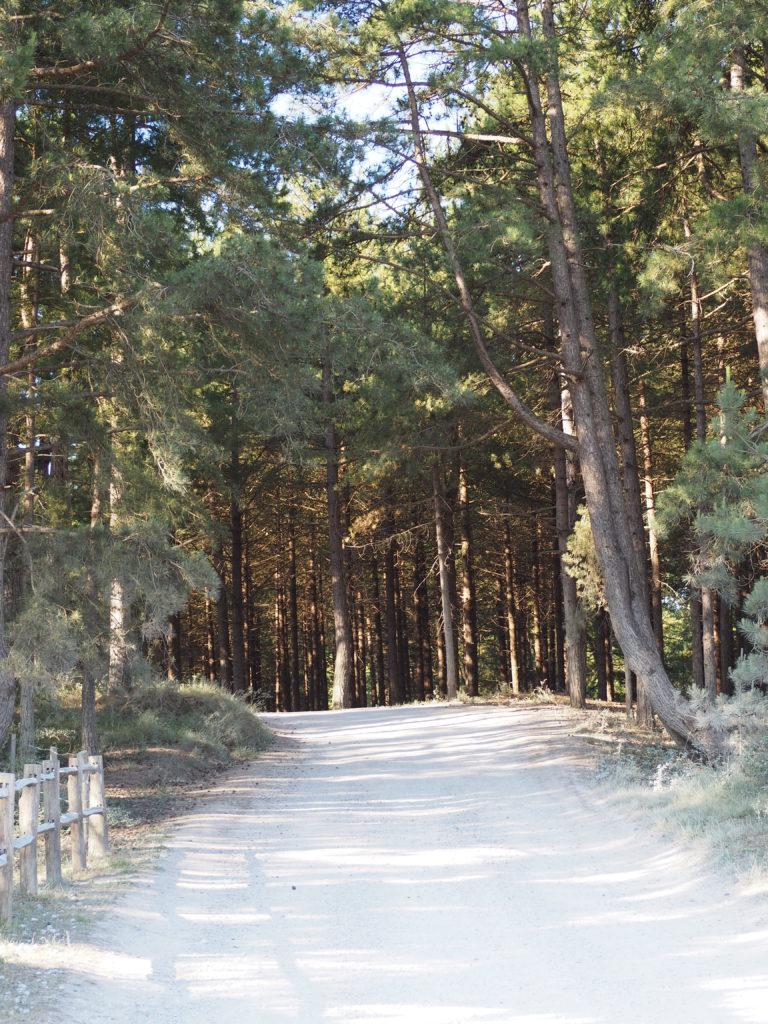 Parc de Marquenterre